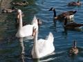Lake & Waterfowl